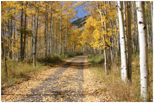 pic of road in the fall